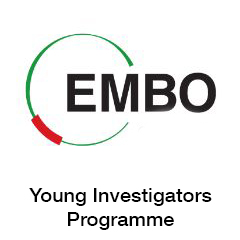 EMBO Young Investigators Programme