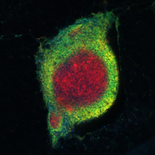 Babraham Institute Image of the Month – May 2014