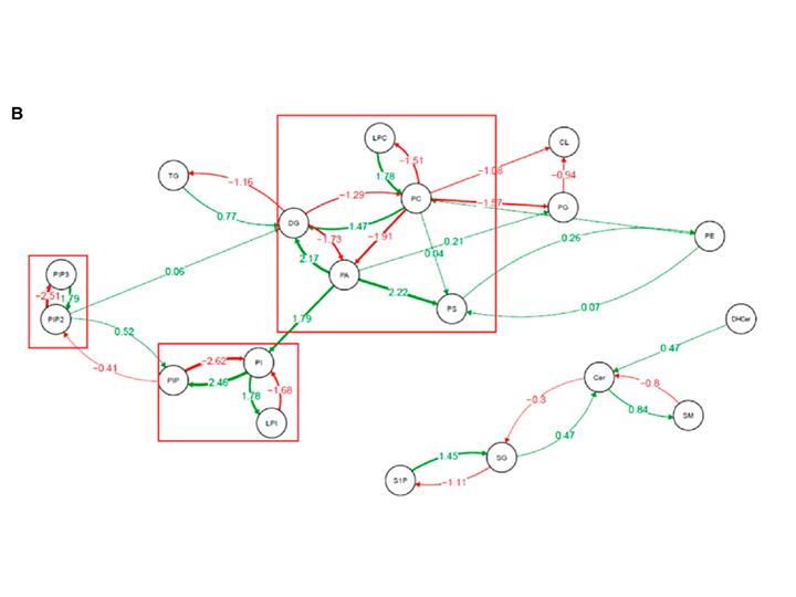 Lipidomics structure