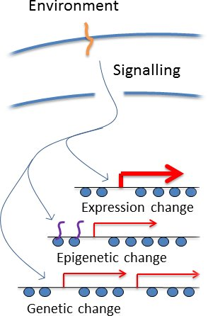 Genome change figure