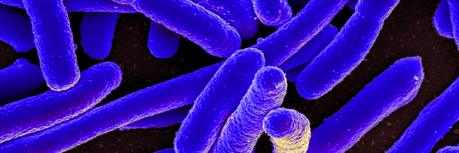 How bacterial toxins could treat autoimmune diseases