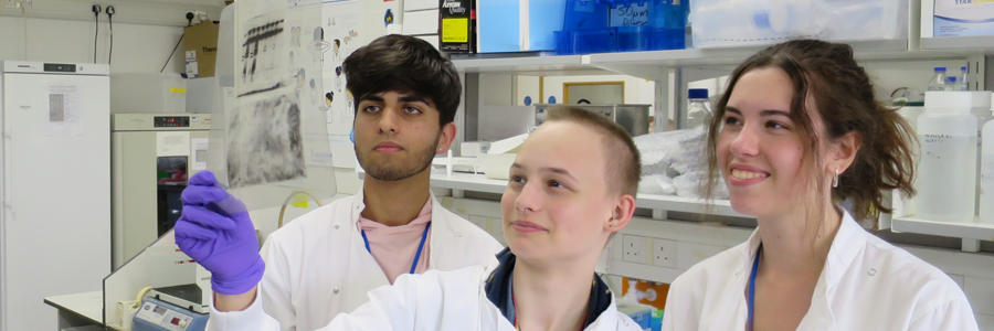 Our Sixth Form Summer of Science